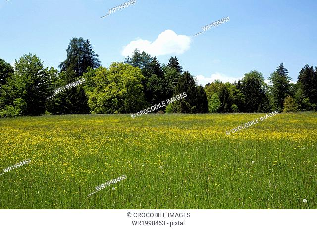 Bavaria,Cloud,Day,Daytime,Europe,Field,Forest,Germany,Grass,Horizontal,Land,Landscape,Landscape Format,Location Shot,Meadow,Natural Light,Nature,No One