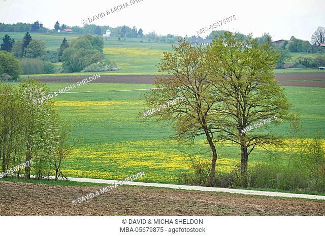 Scenery, Upper Palatinate, Bavaria, Germany, Europe