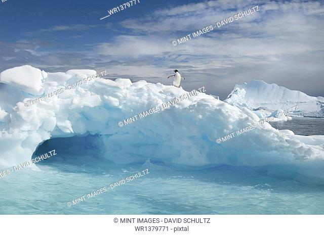An Adelie penguin on top of an iceberg in the Antarctic seas