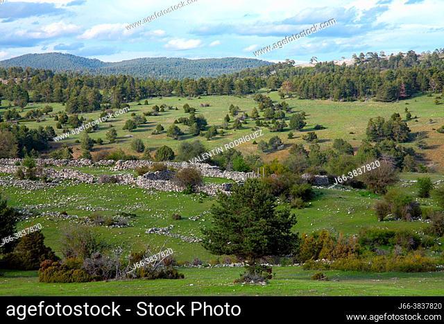 The Maíllo valley in the Sierra de Cuenca natural park