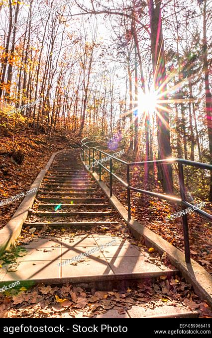 Path in natural park with autumn trees. Sunny autumn picturesque forest landscape with sunlight. Fall trees with colorful leaves background