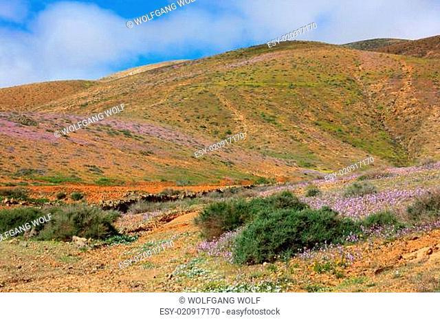 Fuerteventura Landschaft 2015
