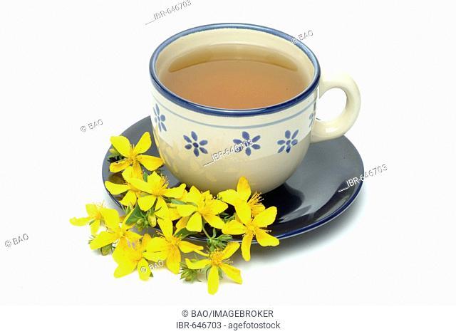 St. John's Wort or Tipton's Weed (Hypericum perforatum), herbal tea, medicinal tea