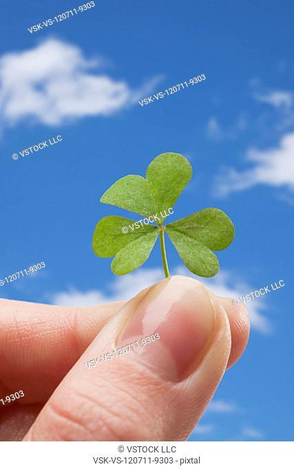 Hand holding clover against sky
