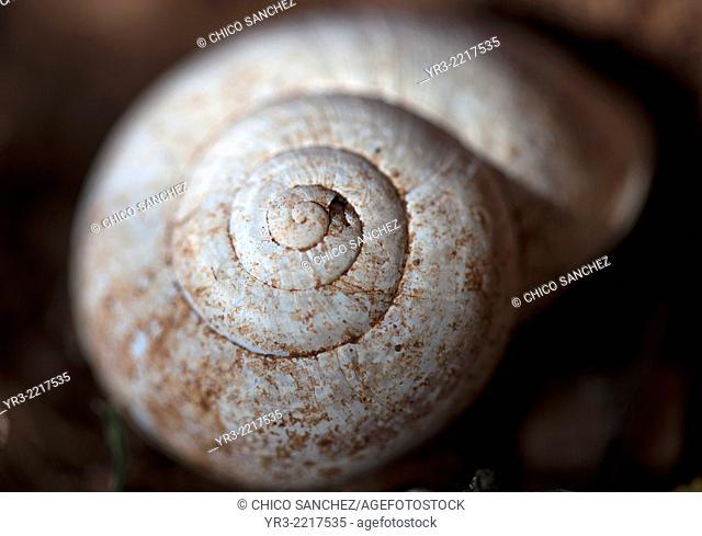 A snail in Villaluenga del Rosario, Sierra de Grazalema Natural Park, Cadiz province, Andalusia, Spain