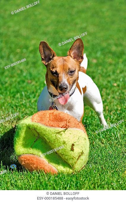 Riesen Ballspiel