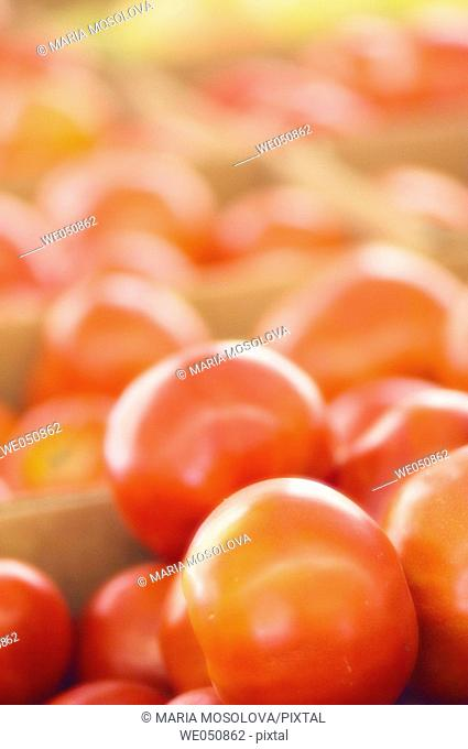 Solanum lycopersicon, August 2006. Maryland, USA
