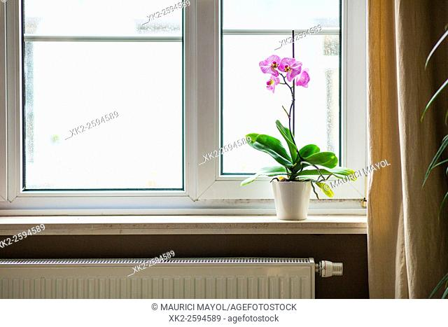 Gas heating and home cozyness with nice Orchid