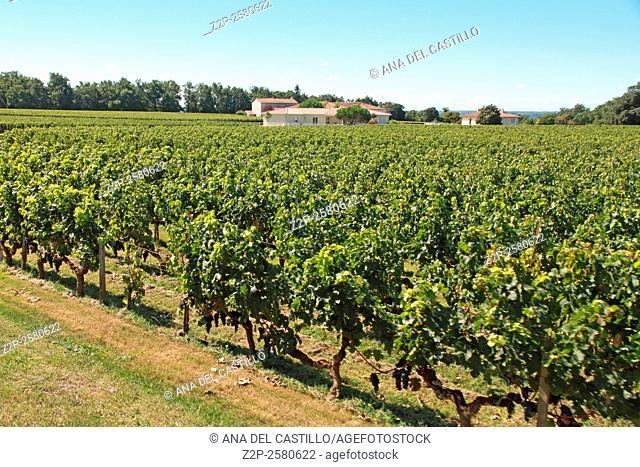 Vineyard of famous Bordeaux Saint-Emilion wines cellars Aquitaine France