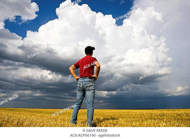 a man looks out over a harvested oat field with a massive cumulonimbus cloud buildup in the background, near Dugald, Manitoba, Canada