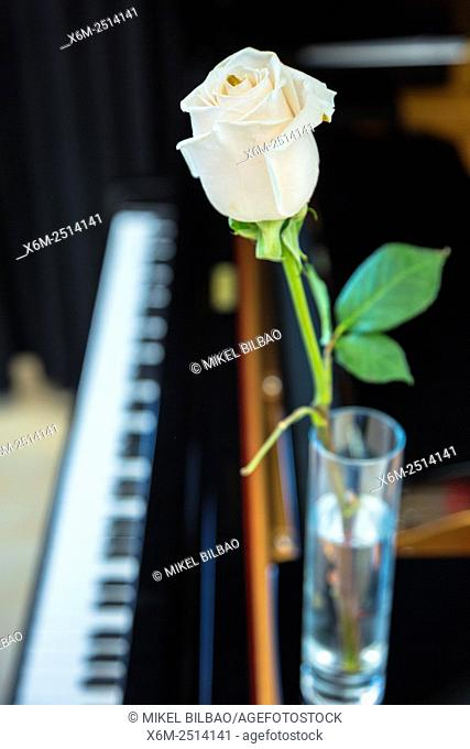 Piano and rose flower