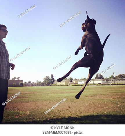 Caucasian man watching dog jump in park