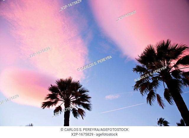 Palms in Puerto Banus, luxury beach in Costa del Sol, Andalucia, Spain
