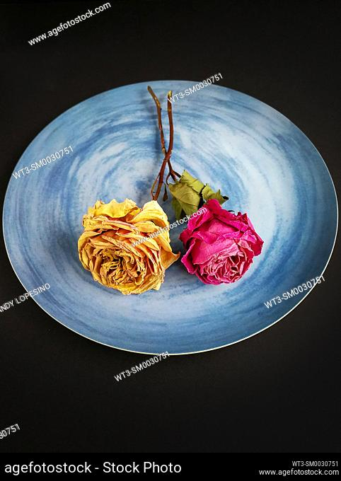 Two dried roses, one yellow and one rose on a blue plate