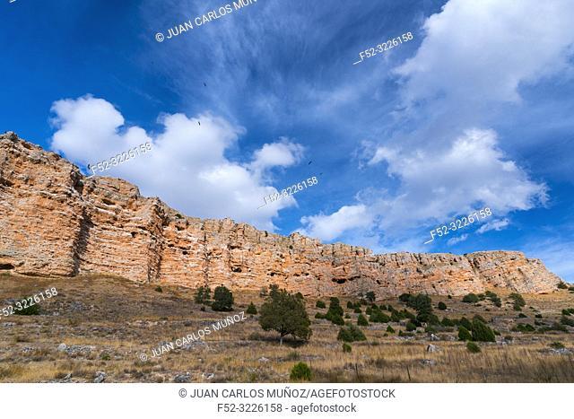 Clouds and Griffon vultures, Hoces del Río Riaza Natural Park, Río Riaza, Montejo de la Vega de la Serrezuela, Segovia, Castilla y Leon, Spain, Europe