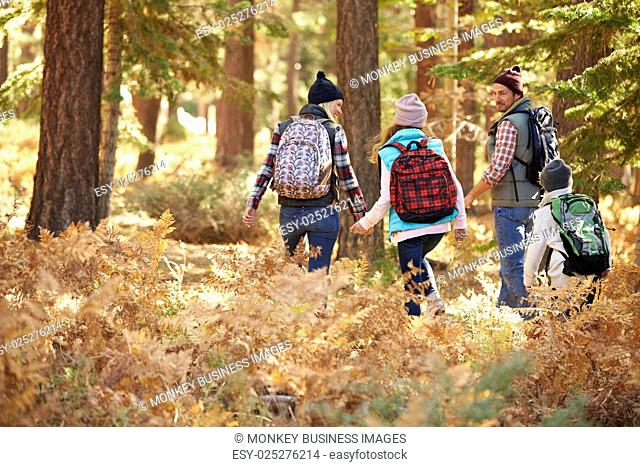 Back view of family hiking through forest, California, USA