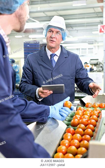 Quality control workers with digital tablet talking and sorting ripe red tomatoes on production line in food processing plant