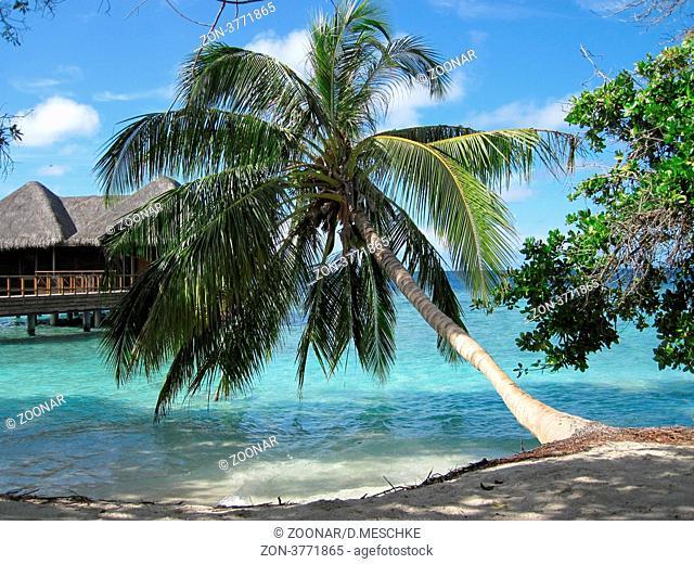 Palmenidylle mit Wasserbungalows im Hintergrund auf der Insel Bandos auf den Malediven