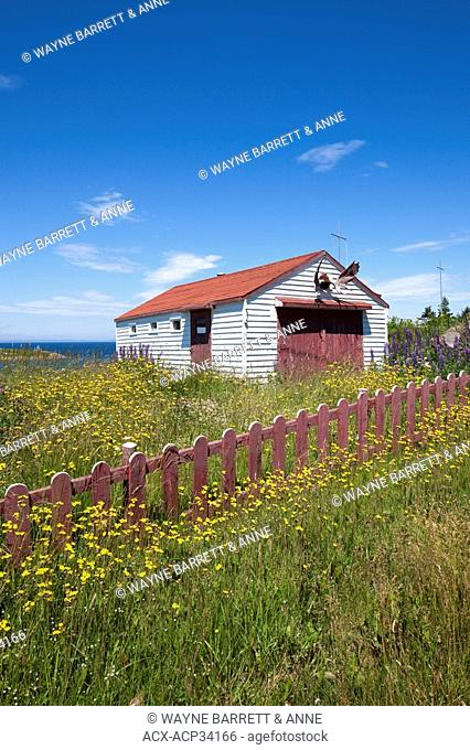 Field of wildflowers along a fence in New Perlican, Newfoundland and Labrador, Canada