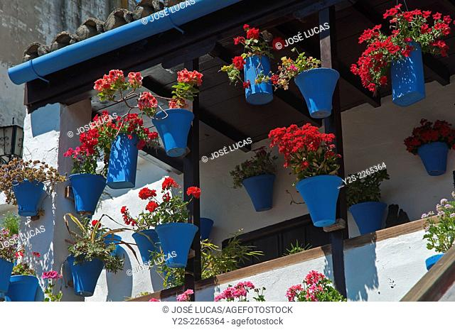 Typical courtyard -flowerpots, Cordoba, Region of Andalusia, Spain, Europe
