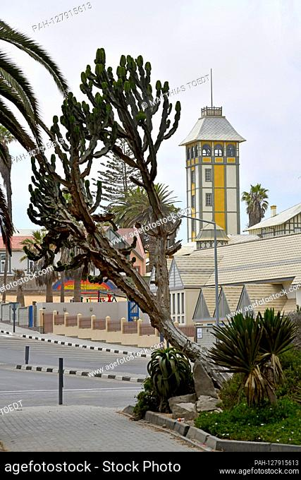 Large succulent crop in the street image of Swakopmund, in the background the Damara tower, which formerly belonged to the Woermann trading house and allowed...
