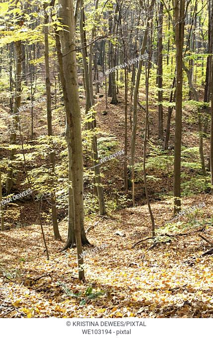 A Fall Ohio forest along the Blue Hen Falls trail