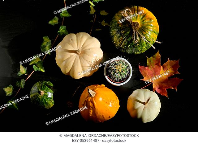 Autumn decoration with leaves and Colorful Pumpkins