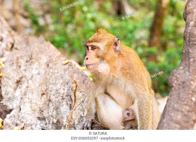 Cute monkeysA cute monkey lives in a natural forest of Thailand
