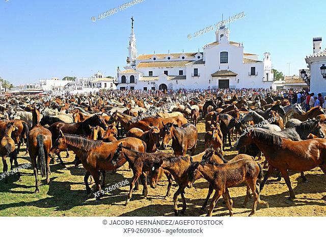 Saca de las yeguas festival.El Rocío.Almonte.Huelva province.Andalusia.Spain