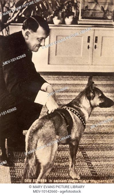 German statesman Adolf Hitler, with his favourite German shepherd bitch, Blondie