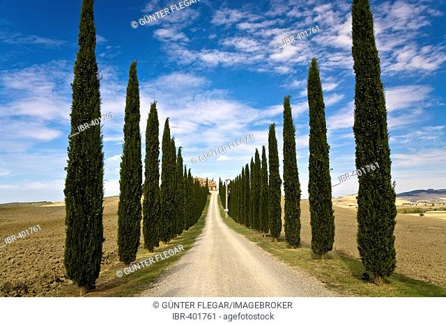 Cypress avenue (Cupressus) leads to a country house in the valley Val d'Orcia Crete Tuscany Italy