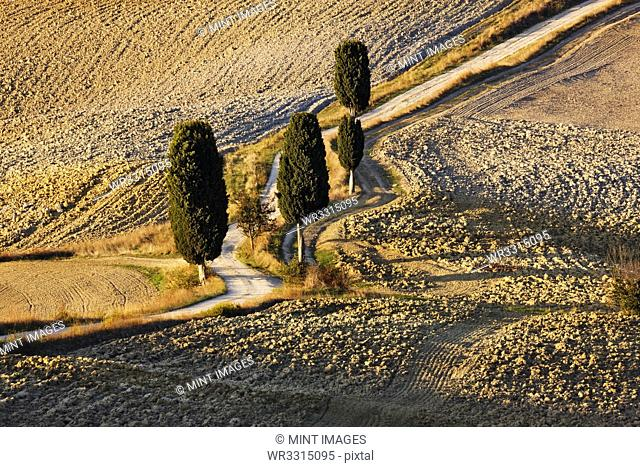 Winding Dirt Road and Cypress Trees