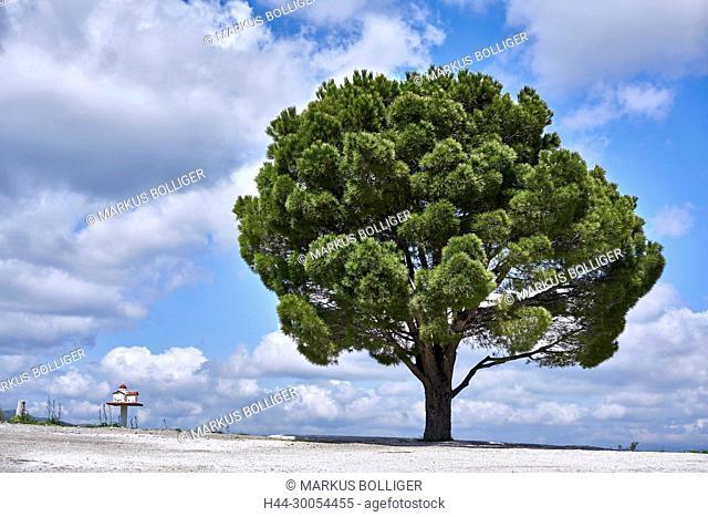 Greece, Crete, tree, Pinus, pine, pine, Kalabrische pine, Pinus brutia