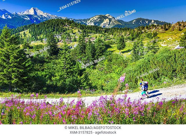 Mountains in summer with hiker and flowers. Velika Planina sky area. Upper Carniola region. Slovenia, Europe