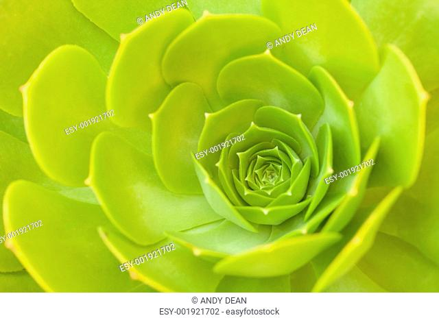 Beautiful Succulent Abstract