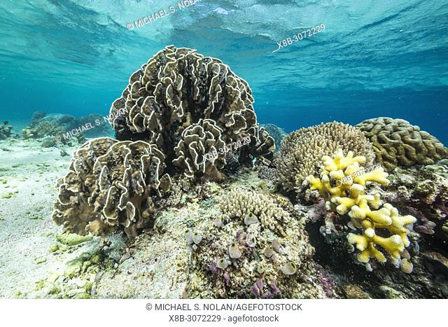 Profusion of hard and soft corals underwater on Mengiatan Island, Komodo National Park, Flores Sea, Indonesia