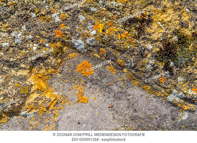 full frame background showing various colorful lichen on grey stone