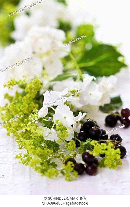 Hydrangea, lady's mantle and blackcurrants