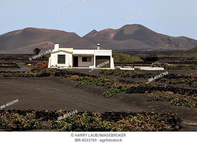 White House in the wine-growing region La Geria, Lanzarote, Canary Islands, Spain