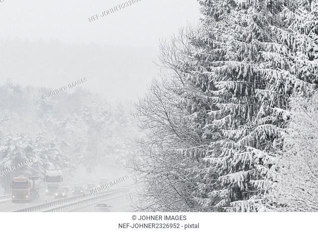 Winter trees near motorway