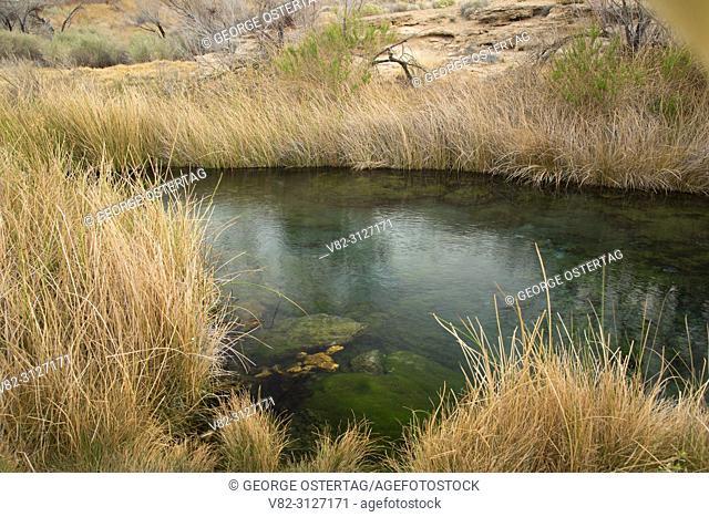 Spring along Point of Rocks Trail, Ash Meadows National Wildlife Refuge, Nevada