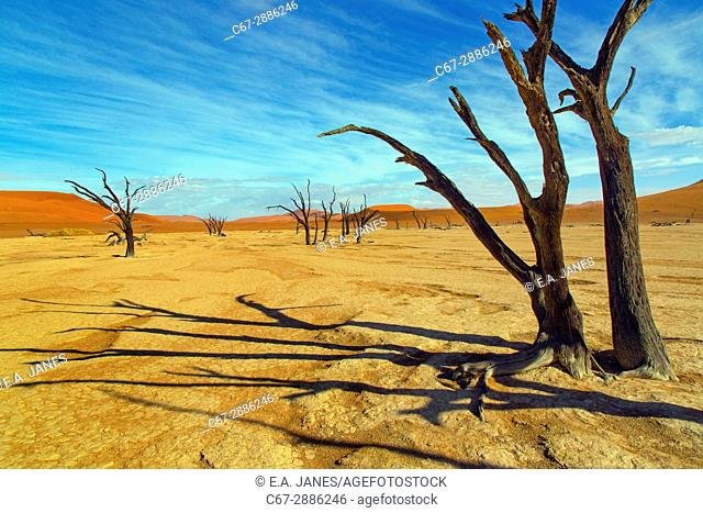 Namib desert in Sossusvlei region with dead Camel thorn trees Namibia March