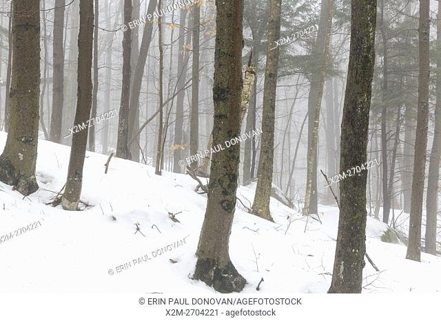 Forest engulfed in fog on a warm winter day at Flume Gorge in Franconia Notch State Park of the New Hampshire White Mountains