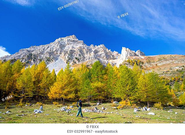 Hiker walking on a colorful valley with great panoramic view and autumnal vivid colors. Wide angle shot in the Italian French Alps