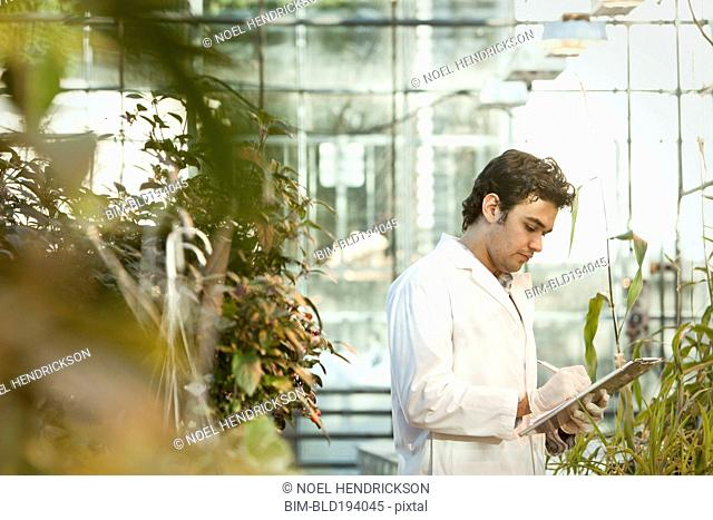 Middle Eastern scientist working in greenhouse