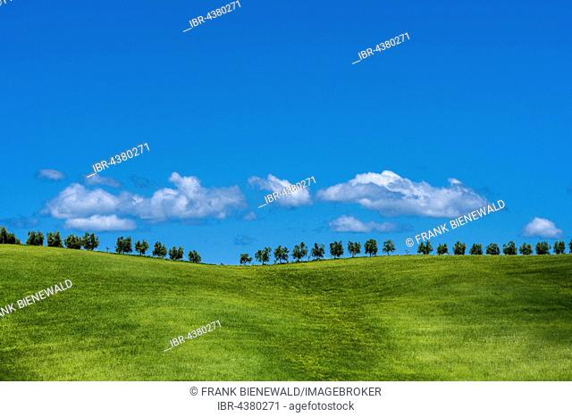 Typical green Tuscan landscape in Val d'Orcia with hills, trees, grain fields and blue, cloudy sky, Montalcino, Tuscan, Italy