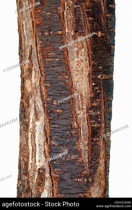Pflaumenbaumstamm, Prunus, domestica