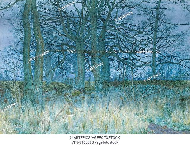 Garden William Fraser - Trees in Winter