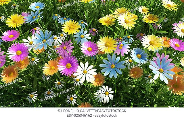 Close up view of a grass filed, plenty of multicolored flowers, viewed from the top