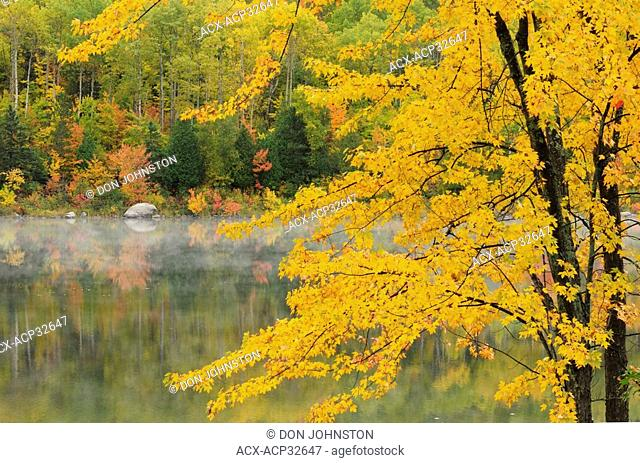 Sugar maple overhanging McCharles Lake, Greater Sudbury, Ontario, Canada